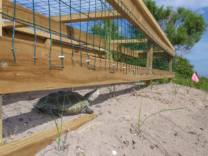 These hybrid barriers not only stop diamondback terrapins from entering the road, but they also provide a safe nesting area for them to lay their eggs. (Credit Brian Crawford/UGA)