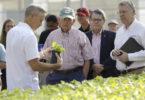 Owner and founder and Georgia alumnus Ken James, left to right, talks about a hosta plant with Agriculture Commissioner Gary Black, President Jere W. Morehead and CAES Dean Sam Pardue in one of the mist production houses at James Greenhouses in Colbert. (Andrew Davis Tucker/UGA)
