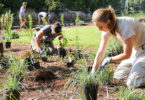 The garden was installed by botanical garden staff, UGA students and volunteers to help educate students and visitors about the importance of native plants in an urban environment. (Shannah Cahoe Montgomery/PSO)