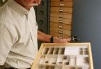Brood II cicadas Rick Hoebeke-v.env