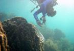 Coral bleaching Dustin Kemp sampling healthy coral-h.photo
