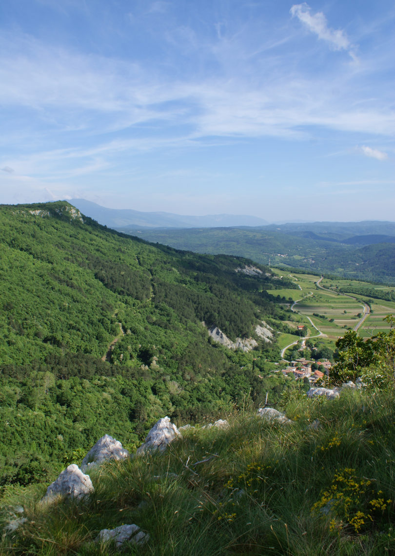 Croatia Istrian peninsula Suzanne Pilaar Birch-v.photo