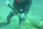 Whale bone discovery - diver-v.action