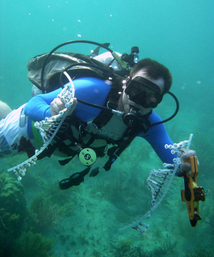 Dustin Kemp sampling mountainous star coral-v.photo