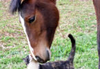 CVM pet photo contest 2011 horse and cat-v.action