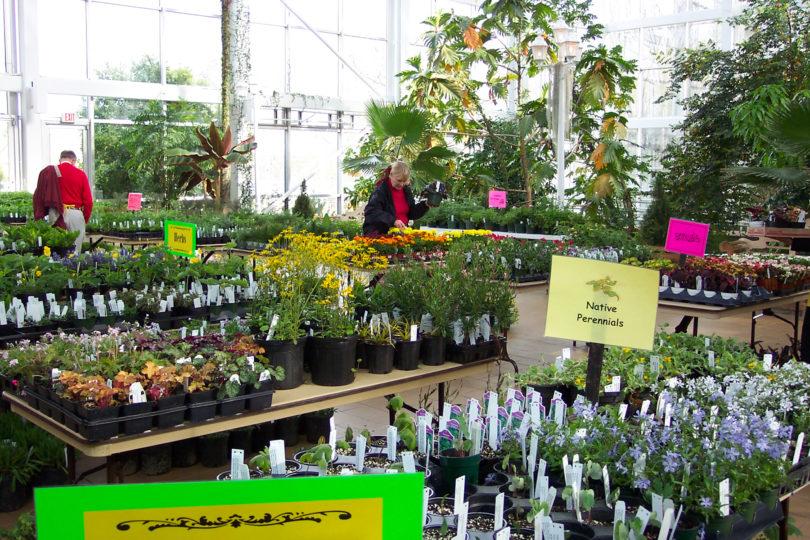 Plantapalooza plant sale 2014-h