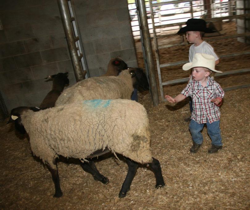 Rodeo Time Uga Students Bring Three Nights Of Steer