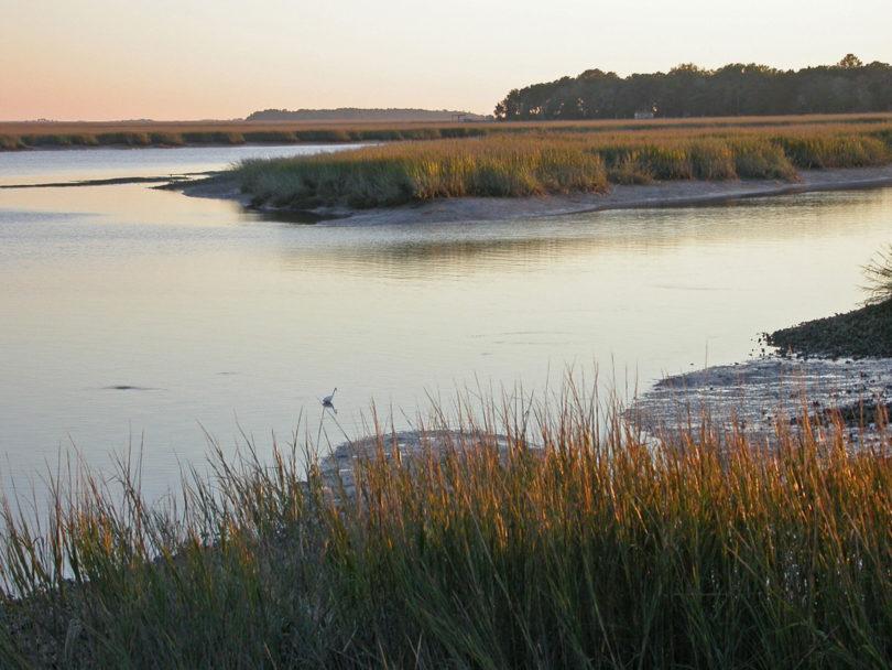 Sapelo Island research site