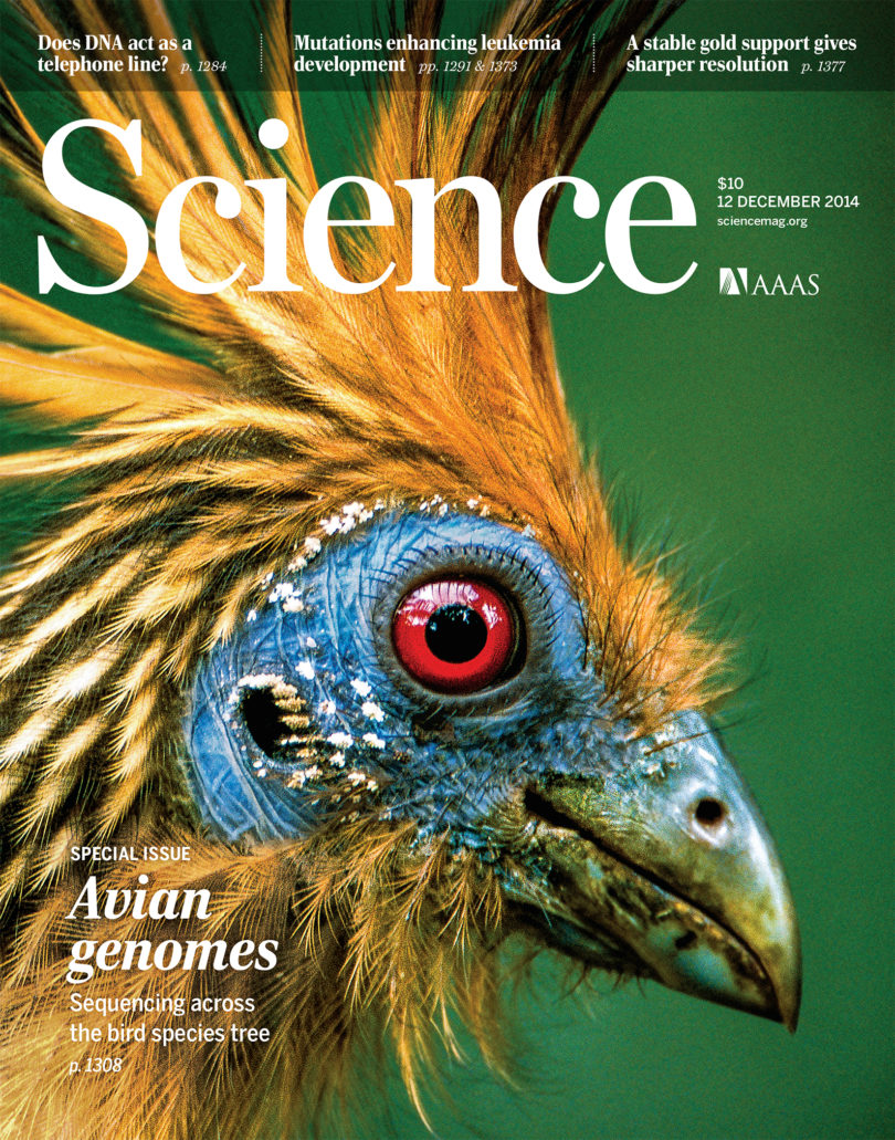 Science magazine cover bird