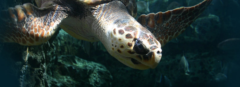 Sea turtle fingerprinting making waves