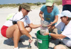 Tybee microplastics Skidaway study-h.photo