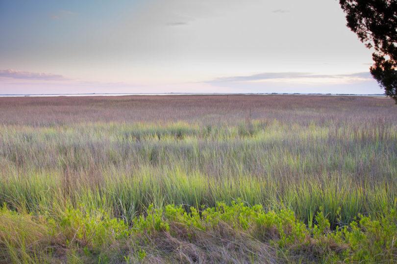 UGA Sapelo marsh grass-h