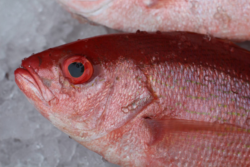 Seafood directory red snapper-h