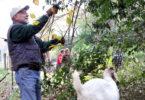 Chew Crew Paul Van Wicklen Goats-h