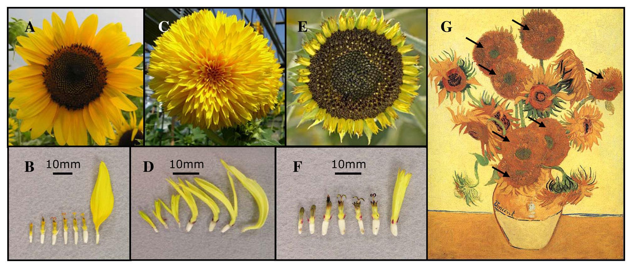 Uga Scientists Reveal Genetic Mutation Depicted In Van Gogh S