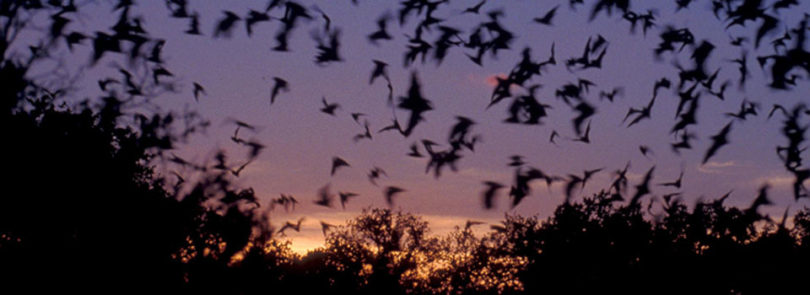 Rabies study sheds light on cross-species transmission