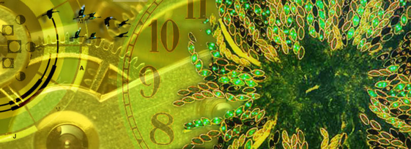 Tick tock goes the biological clock