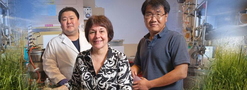 Researchers make fuel production breakthrough