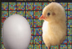 Book shows breadth of poultry science