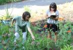 Garden earth training bot garden-h