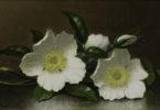 GMOA Martin Johnson Heade Cherokee Roses-h
