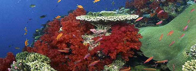 Shallow-water corals more resistant to bleaching
