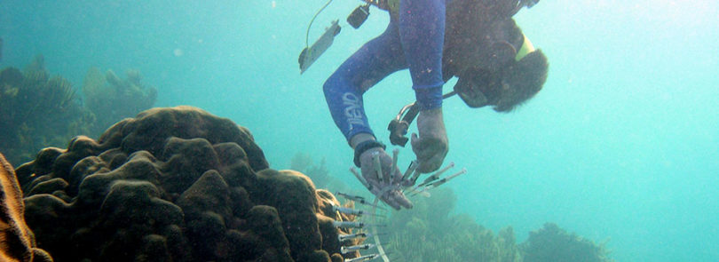 Coral research helps paint an ecological picture