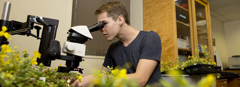 CURO program gives students a jump on research