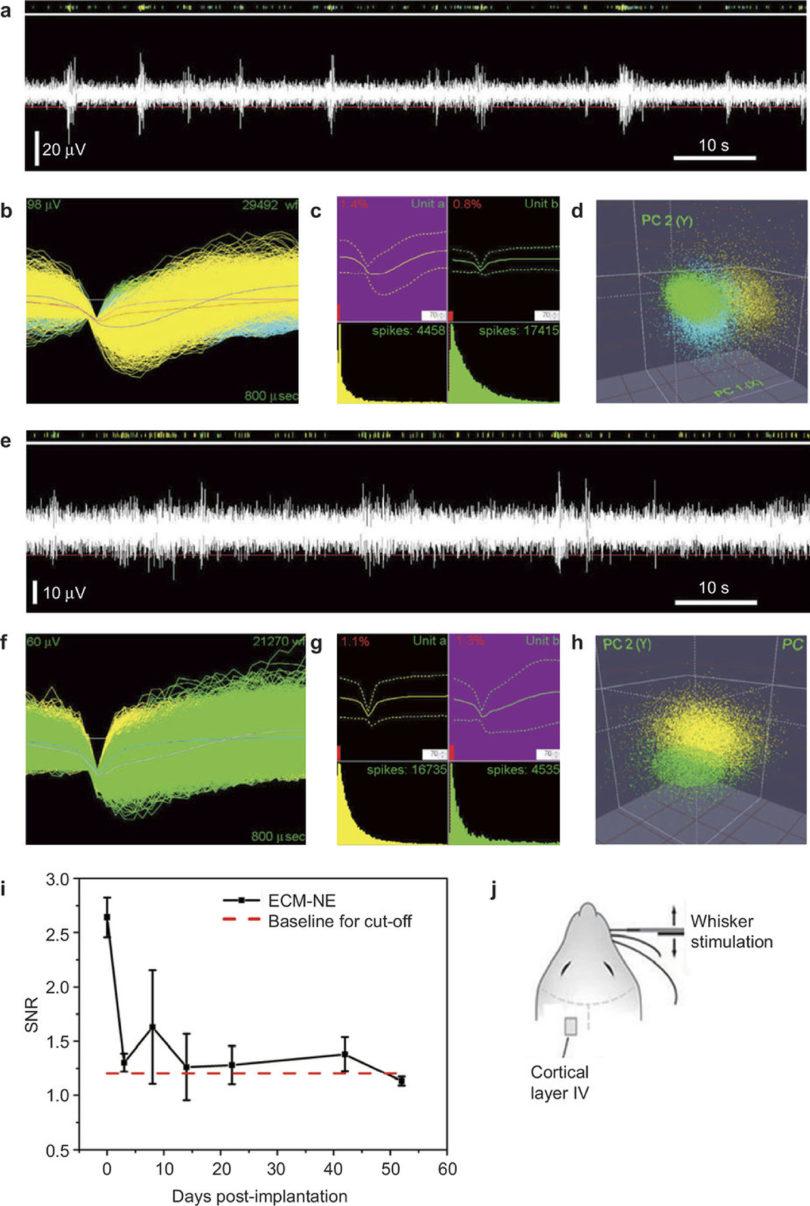 Evoked neuronal signals Karumbaiah RBC 2015-v.graphics