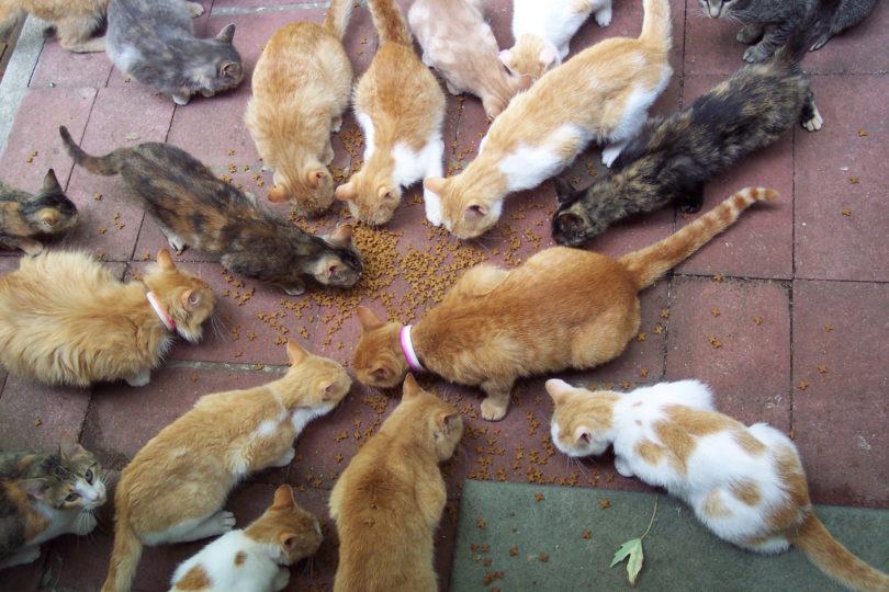 wildlife food provisioning
