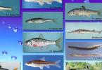 Georgia freshwater fish