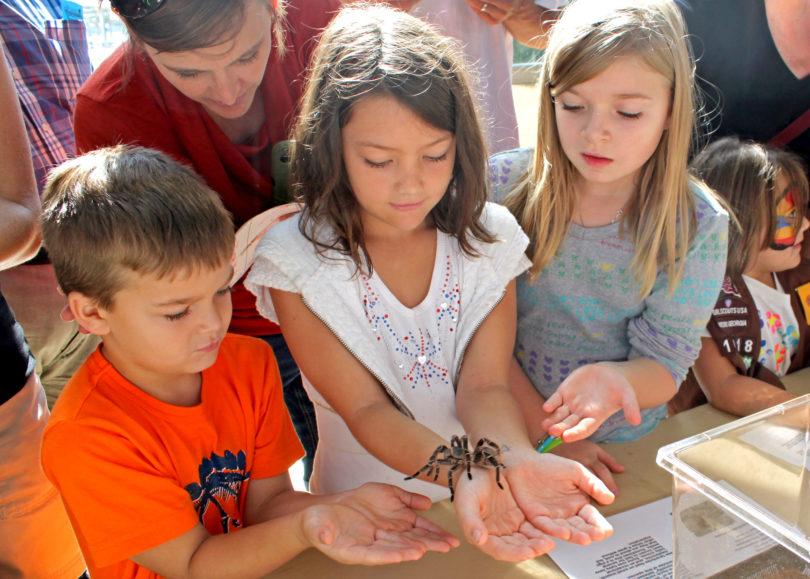 Insectival 2012 tarantula-h.group.env