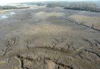 Sea Grant Marsh dieback 2002 Jericho River-h.env