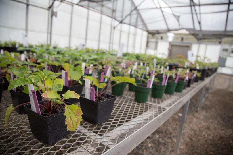 Native Plants sale-h