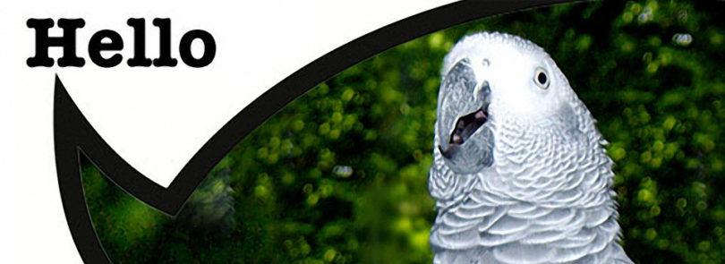 Beyond words: Understanding the African Grey parrot