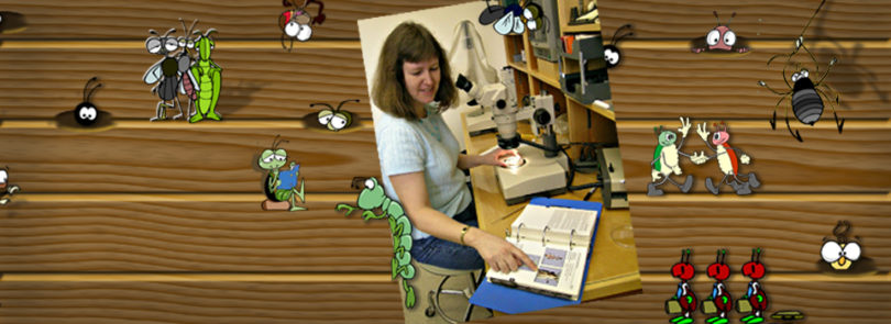 UGA expert helps homeowners identify insects