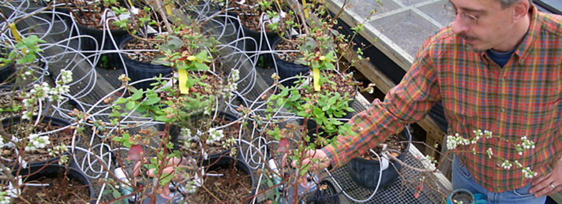 Researcher finds way to halve greenhouse water use