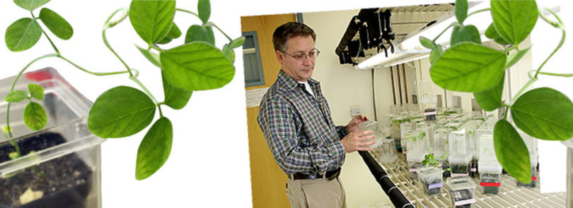 Soybean grant gives researchers tools to unravel better bean