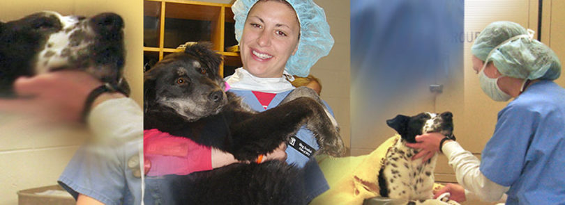 Canine Spay Day at UGA