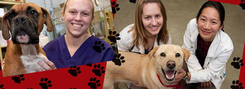 Vets for Pets and People