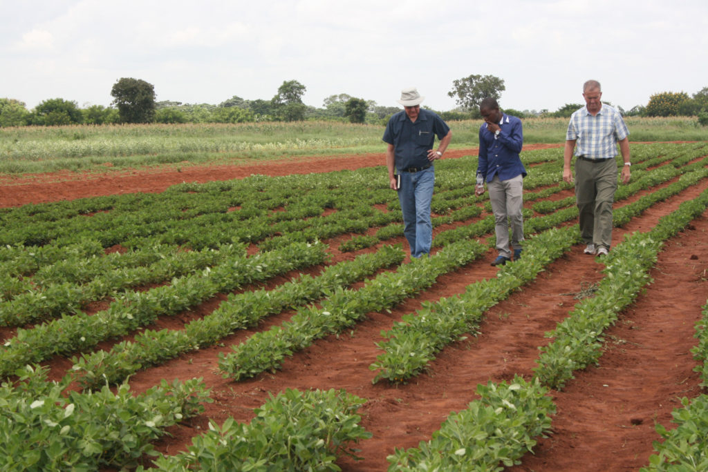 Teachers and student examine a peanut trial field.