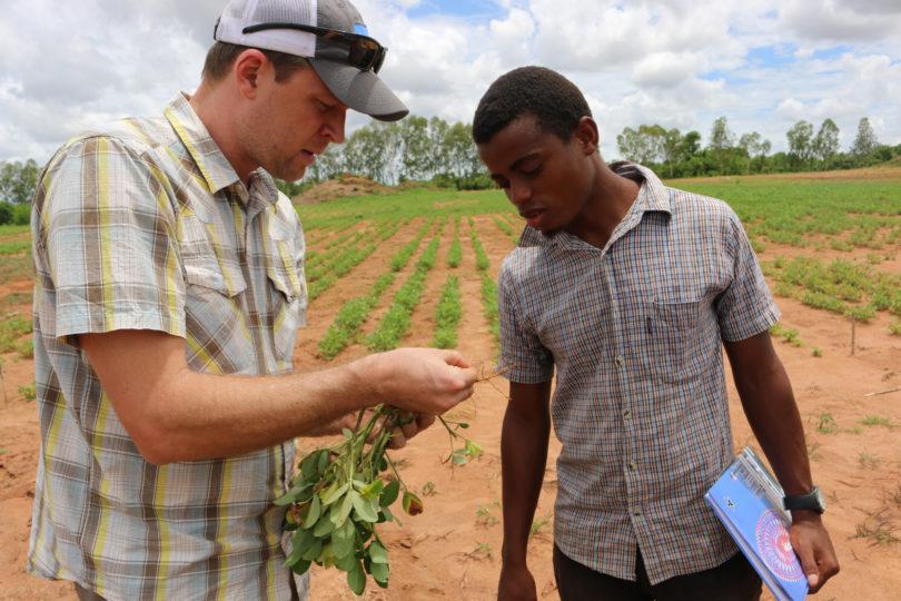 Two men examining a peanut plant