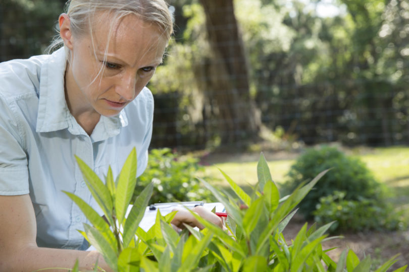 Researcher works with butterflies