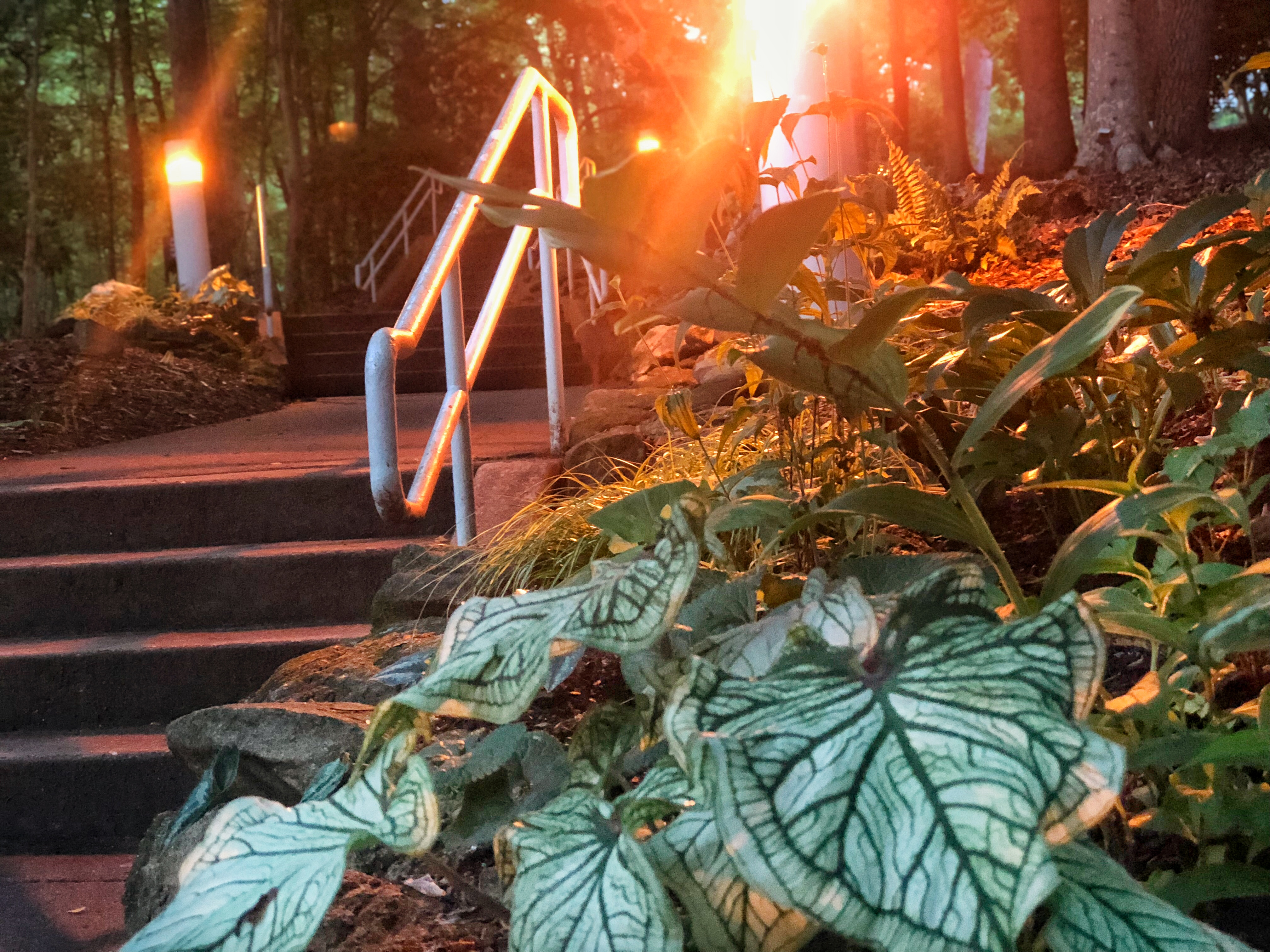Gallery: State Botanical Garden of Georgia - UGA Today