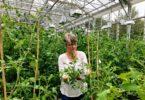 Esther van der Knapp in a greenhouse at UGA.