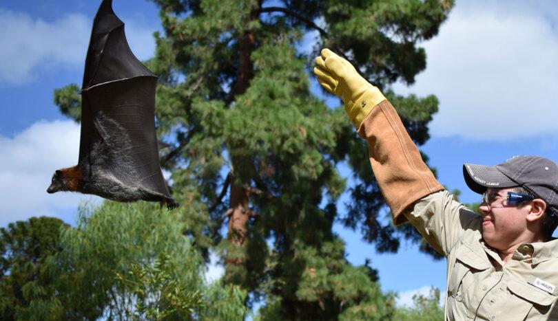 Cecilia Sanchez releases a bat