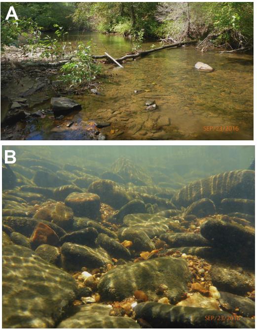 Photos of creek where fish live.
