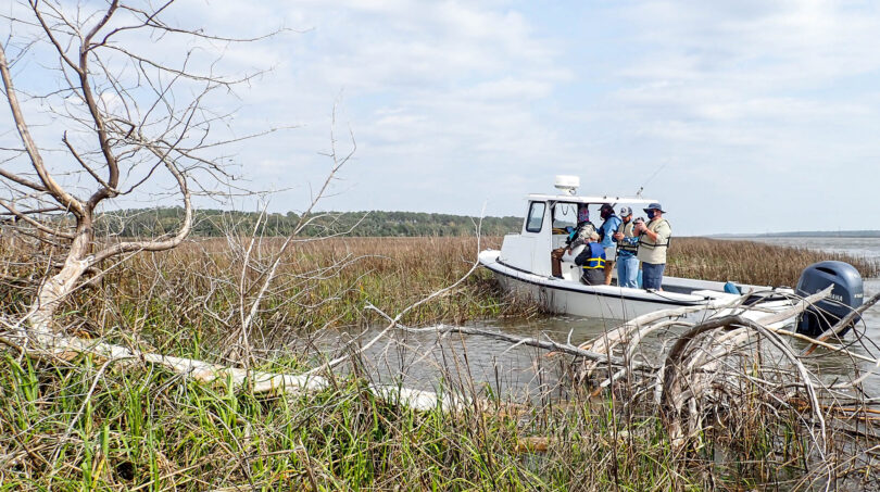 A boat in water and marsh grass.