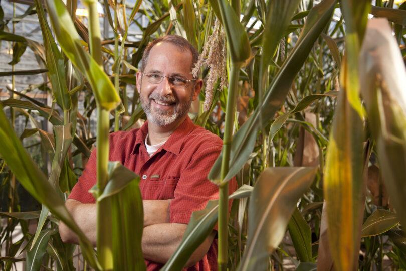Kelly Dawe standing in a cornfield.