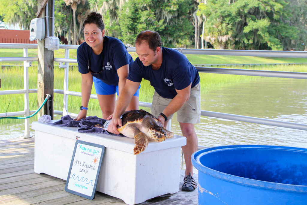 Two people prepare the turtle for release.